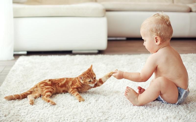 Kassid ja imikud - Haabersti Loomakliinik