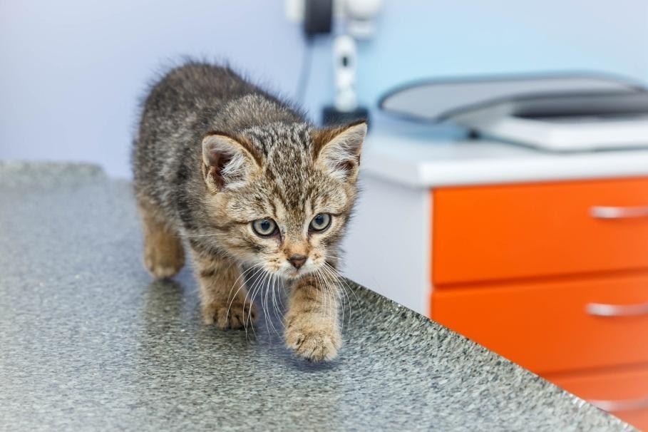 Как давать таблетки вашей кошке - Ветеринарная клиника Haabersti