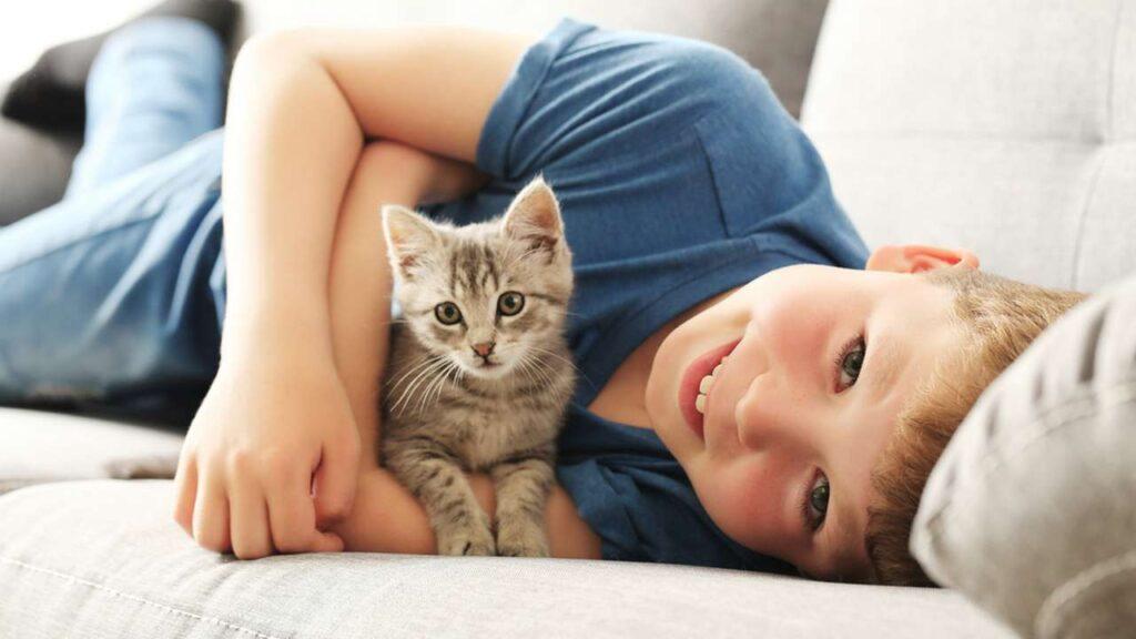 Aidates kassidel ja väikelastel ohutult koos mängida - Haabersti Loomakliinik