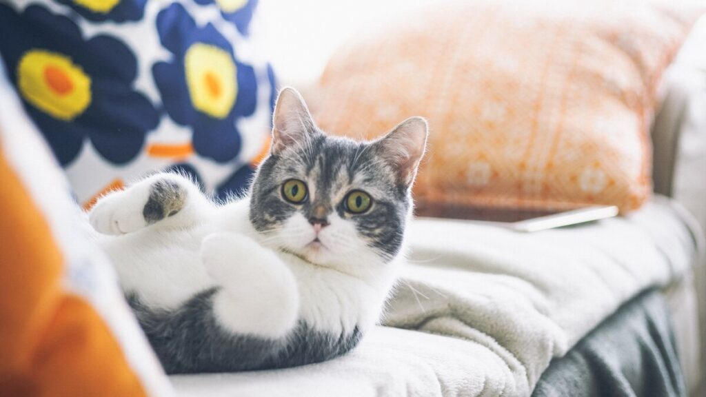 Как приучить кошку приходить на зов, и почему это важно - Ветеринарная клиника Haabersti