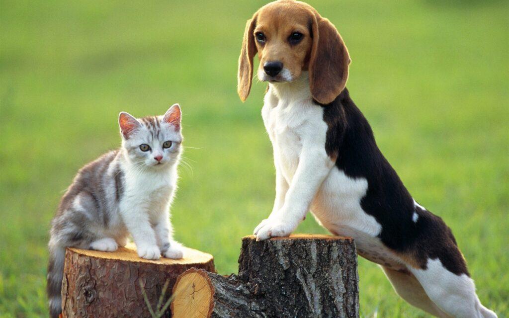 Endocrine diseases in cats and dogs - Haabersti Loomakliinik